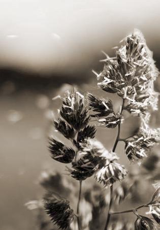 Аллергены, пыльца